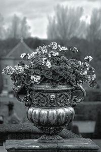 Black&white flower pot