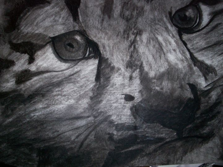 Leopard Kit Charcoal - Portrait Hart Studios