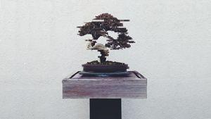 Digital Bonsai