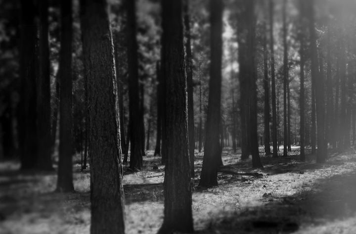 """""""A Forest"""" - The Photography of Michael C Bertsch"""