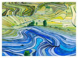 Rice Paddy Fields - Rod Jones Photography