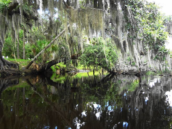 Mossy Curtain - From My Kayak