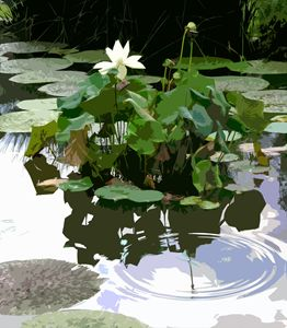 Ripples on the Lotus Pond - Paintings by John Lautermilch