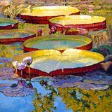"""""""Golden Light on Pond"""""""