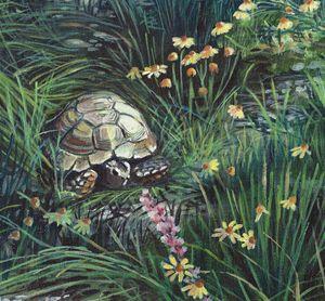 Gopher Tortoise and Habitat