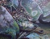 Louisiana Waterthrush near Stream