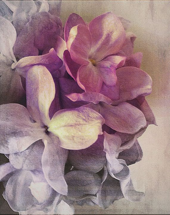 Lilac Possibilities - Rmzphotography