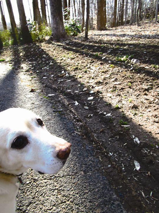 Dog Takes a Walk - Jennifer Hogan