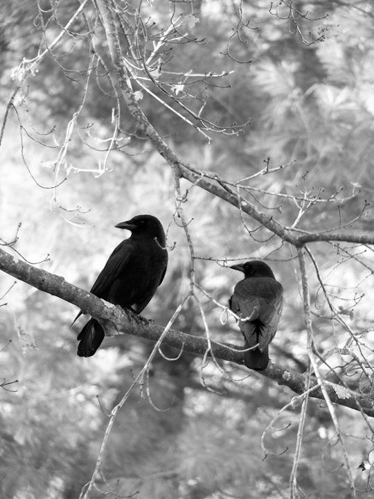 Pair of Birds on Branch 1 - Jennifer Hogan