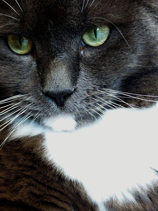 Green-eyed Cat 1 - Jennifer Hogan