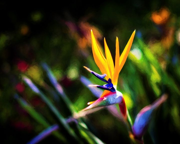 Bird of Paradise in the Sunset - Foto By Rudy
