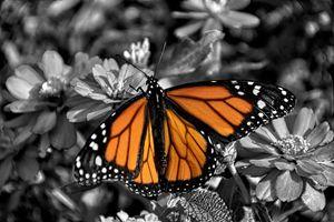 Monarch Spotlight.