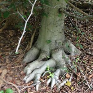 Tree Toes