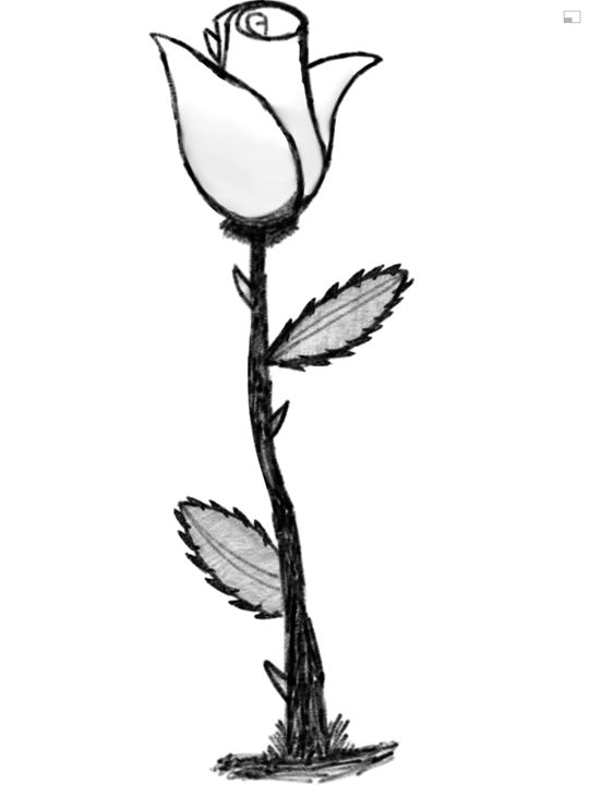 Rose B&W - Digital Art