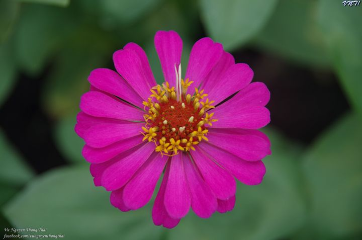 Circle Flower - VNT Thai Photos