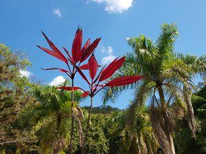 Jamaica Flora 1