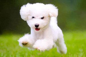 Painted Dog In Air - Reel Life Art