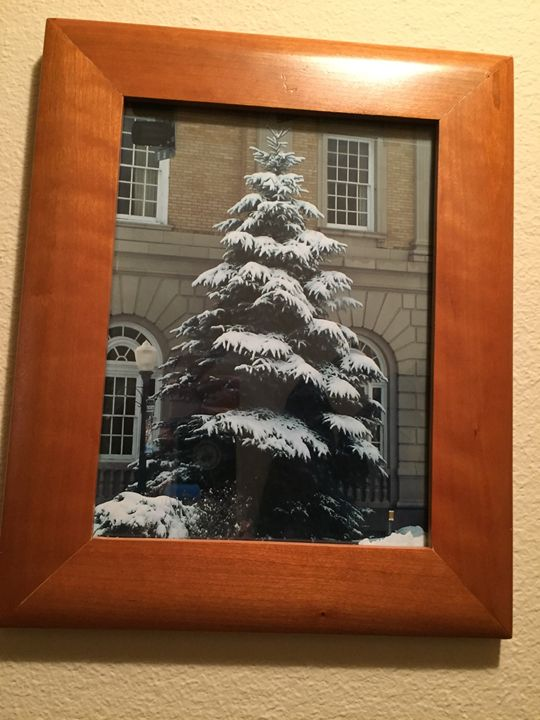 Christmas Tree - Joanne Anello