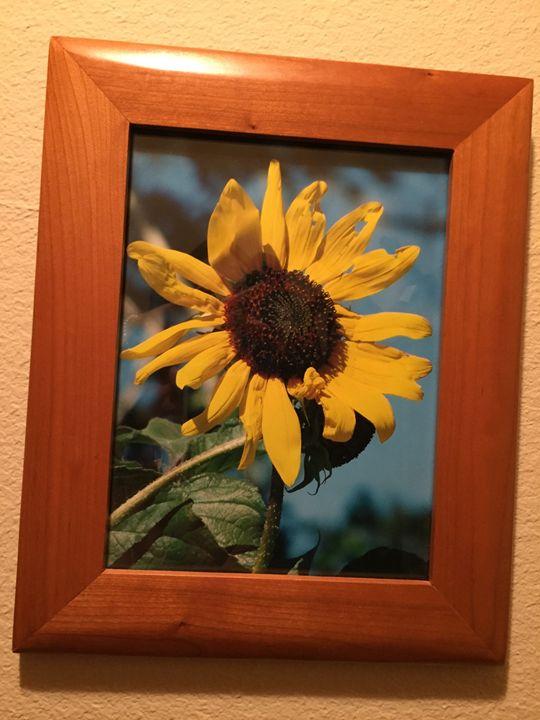 Sun Flower - Joanne Anello