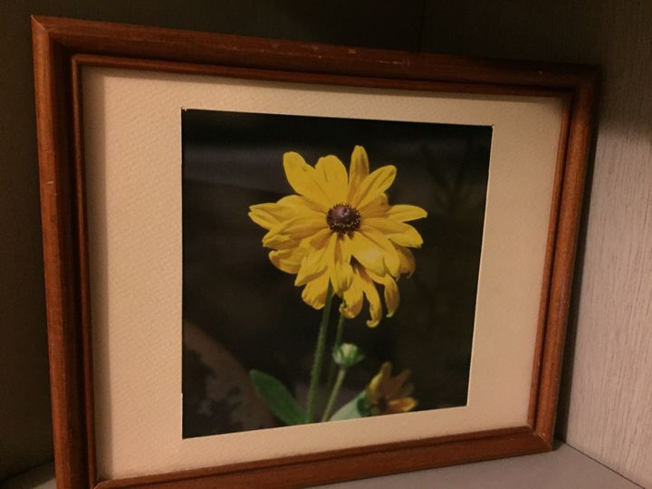 Evening Flower - Joanne Anello