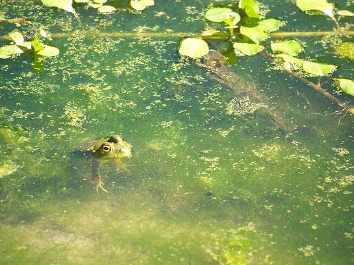 Toadally Floating - Stevie-Pieces of Peace
