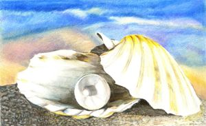 Seashell with pearl.