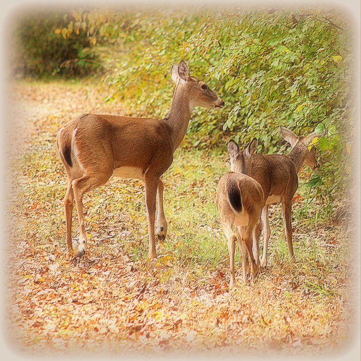 Deer Family - A Touch of Forever by Cassie