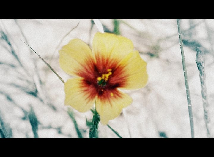 Yellow Flower - A Touch of Forever by Cassie