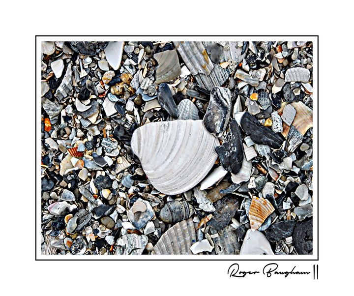 SEASHELLS - ARTOGRAPHY