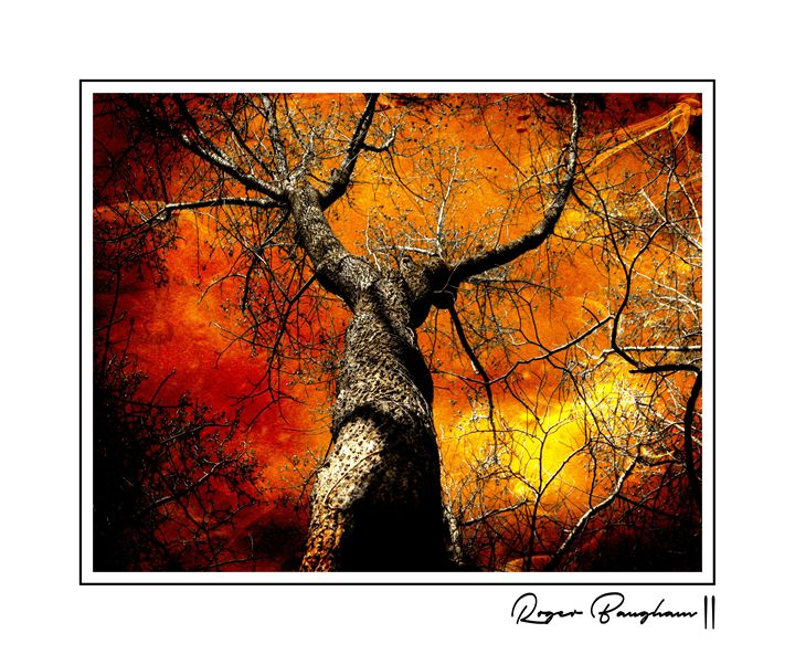TREE OF FIRE - ARTOGRAPHY
