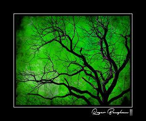 NEON TREE - 1