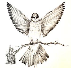 Hand sketched Bird