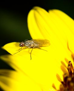 Harry the Fly - Natural Beauty
