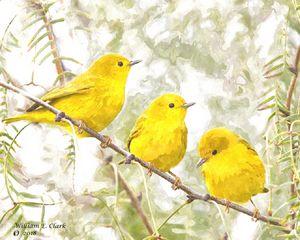 Yellow birds - Will Clark Art