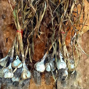 DRYING GARLIC