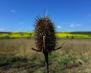 Thistle with rural landscape and blu