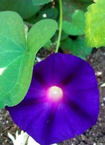 Bright Purple Morning