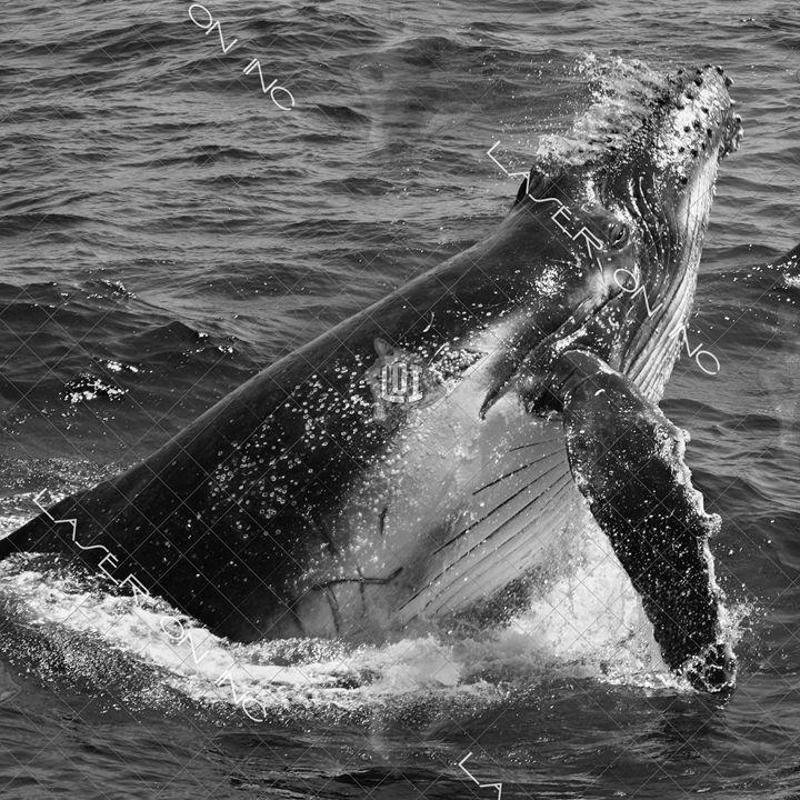 whale-splash-12in - Laser On Inc