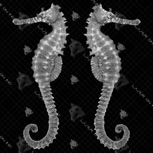 2seahorse-12in
