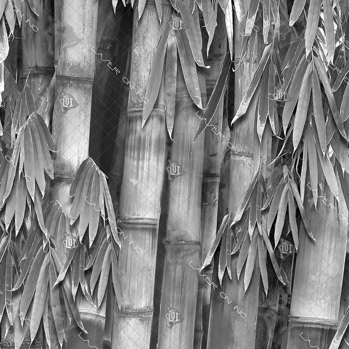 bamboo-forest12in - Laser On Inc