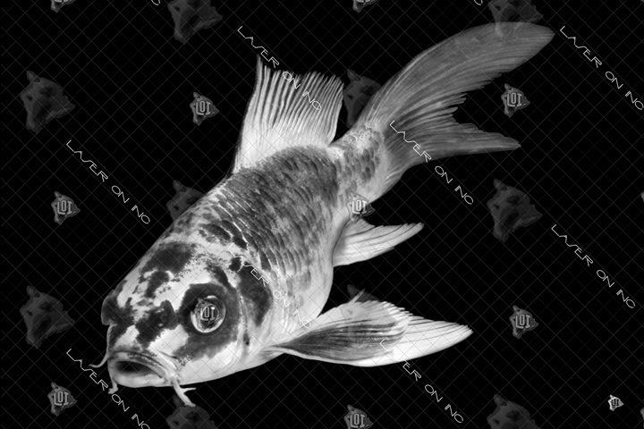 fish4309-24 - Laser On Inc