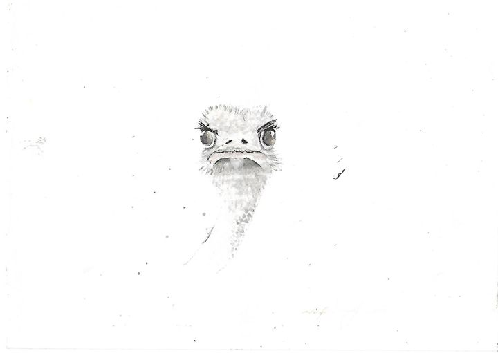 Ostrich is staring at me - Chillisforte