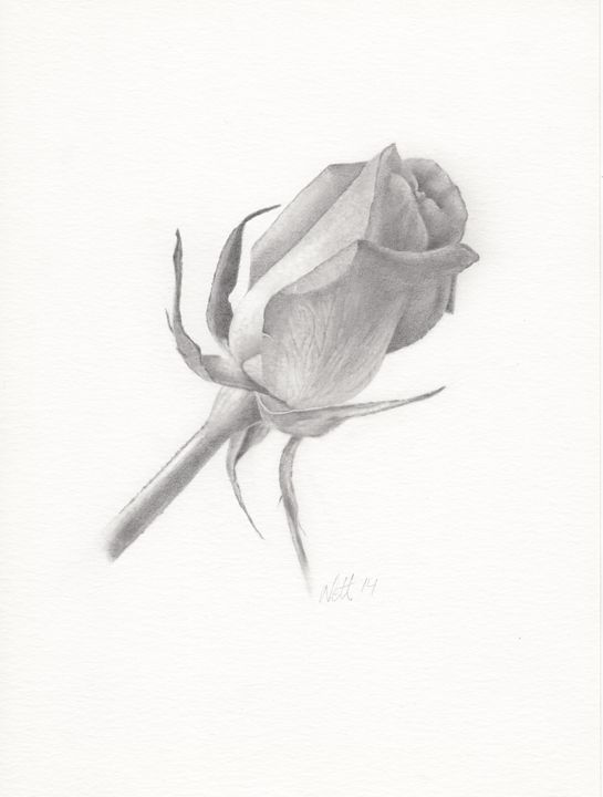 Rose budding - Ryman-Art