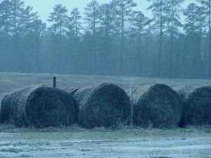 Wet Hay Barrels