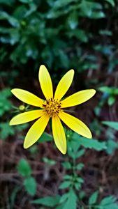 flower in woods