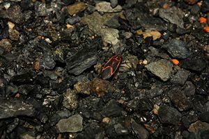 Bug on Rocks