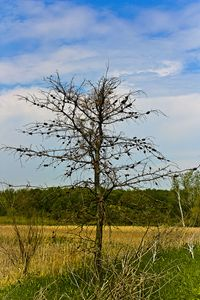 Tree over Field of Cattails