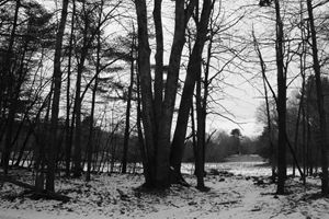 Opening to Winter Field (BW)