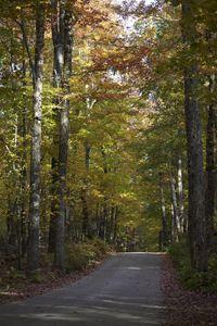 Deep Woods Lane