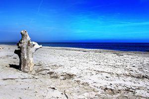 seasculpture II